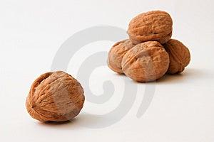 Walnuts Stock Photos - Image: 14310043