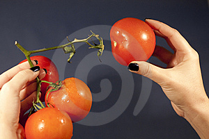 Pulling The Tomatoe Royalty Free Stock Image - Image: 14310656
