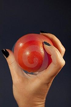Holding A Tomatoe Stock Photography - Image: 14310662
