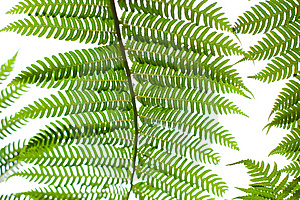 Fern Plant Stock Photo - Image: 14312060