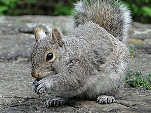 Adorable Squirrel Stock Images - Image: 14312244