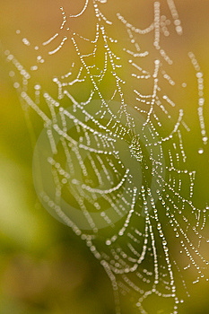 Wet Spider Web In The Morning Mist Royalty Free Stock Images - Image: 14312309
