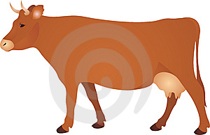Cow  Stock Photo - Image: 14315290