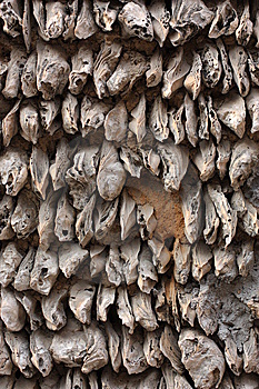 Oyster Shell Wall Royalty Free Stock Photography - Image: 14317357
