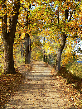 Autumn Way Royalty Free Stock Photography - Image: 14319397