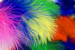 Colored Feathers Royalty Free Stock Photos - Image: 14319408