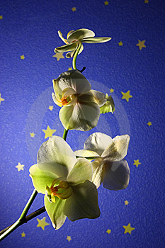 Wild Orchid Stock Images - Image: 14319924