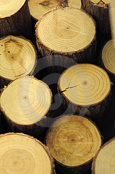 Wood Cross Section Stock Image - Image: 14321111