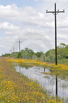 Texas Roadside Wildflowers Stock Photo - Image: 14326920