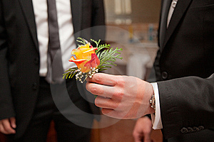 Flower And Hand Royalty Free Stock Image - Image: 14332236