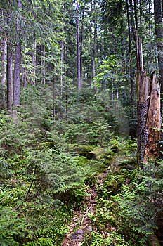 Forest Thicket Stock Photos - Image: 14333723