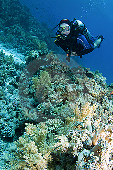 Scuba Diver On Coral Reef Royalty Free Stock Image - Image: 14334126