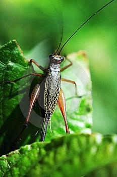 Grasshopper Royalty Free Stock Image - Image: 14335886