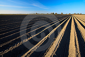 Cultivated Potato Field In Spring Time Stock Images - Image: 14341604