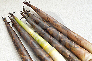 Bamboo Shoots Royalty Free Stock Photo - Image: 14343315