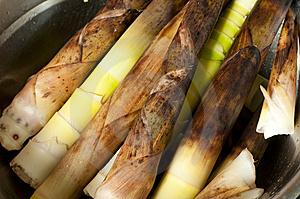 Bamboo Shoots Stock Photos - Image: 14343393