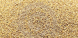 Texture Of Millet Stock Photos - Image: 14345883