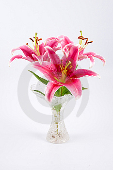 Pink Lily Stock Photo - Image: 14346840