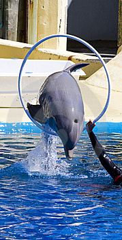 Dolphin Jump Out Royalty Free Stock Photography - Image: 14348847