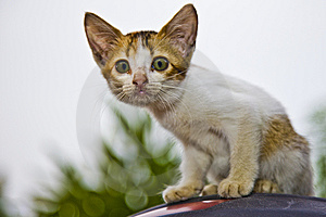 Curious Kitten Royalty Free Stock Photography - Image: 14348897
