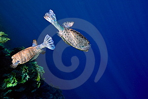 Underwater Image Of Tropical Fishes Royalty Free Stock Photography - Image: 14349697