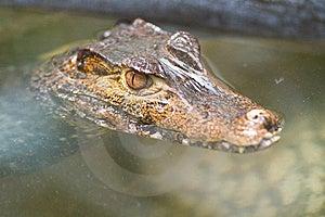 Crocodiles Stock Photo - Image: 14350480