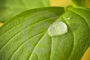 Water Drops On Leaf. Royalty Free Stock Photo - Image: 14351125