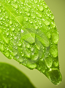 Water Drops On Leaf. Royalty Free Stock Images - Image: 14351969