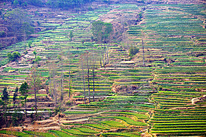 Terraced Fields Stock Images - Image: 14352544