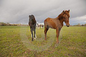 Sorrel Horse With Others In Background Stock Image - Image: 14361151