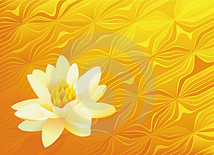 Lonely Lily Royalty Free Stock Image - Image: 14361456