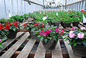 Hanging Baskets Royalty Free Stock Photo - Image: 14361875