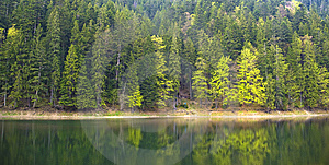 Forest Lake Shore Stock Photos - Image: 14373423