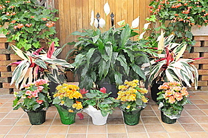 Flower-garden Stock Images - Image: 14374194