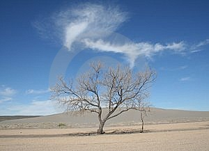 Tree In Idaho Desert Stock Image - Image: 14374951