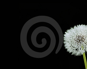 Blowball Stock Image - Image: 14385051