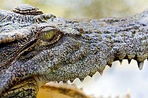 Crocodile Eye Royalty Free Stock Photos - Image: 14385748