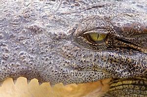 Crocodile Eye Stock Photography - Image: 14385792