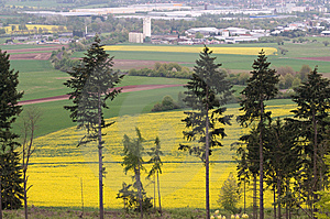 Outskirts Of Town And Canola Fields. Stock Images - Image: 14388324