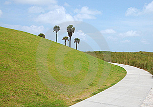 Palm Trees Behind Green Hill Stock Photos - Image: 14389353