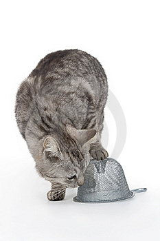 Cat With Trap Royalty Free Stock Photography - Image: 14393557
