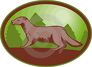 European Mink Side View Stock Images - Image: 14394684