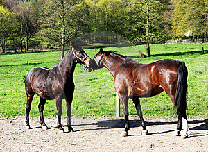 Pair Of Horses Stock Photography - Image: 14398782