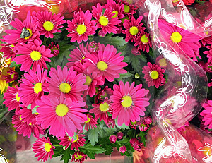 Pink Chrysanthemums In Cellophane Paper Stock Photography - Image: 1443712