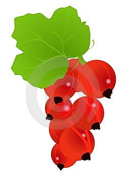 Currant Royalty Free Stock Photos - Image: 14402728