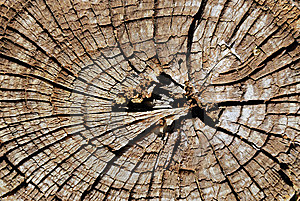 Old Tree Section Stock Images - Image: 14404004