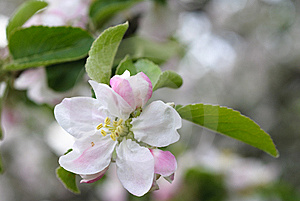 Peach Blossoms Against A Blue Sky Royalty Free Stock Photography - Image: 14404117