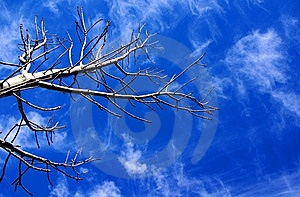 Bare Tree & Sky Stock Image - Image: 14405711
