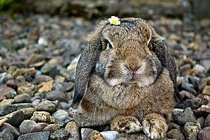 Rabbit Portrait Royalty Free Stock Images - Image: 14408229