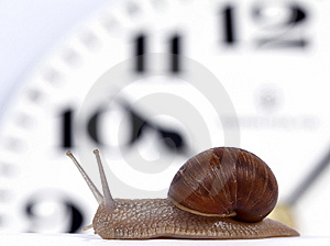 Edible Snail Stock Images - Image: 14411194